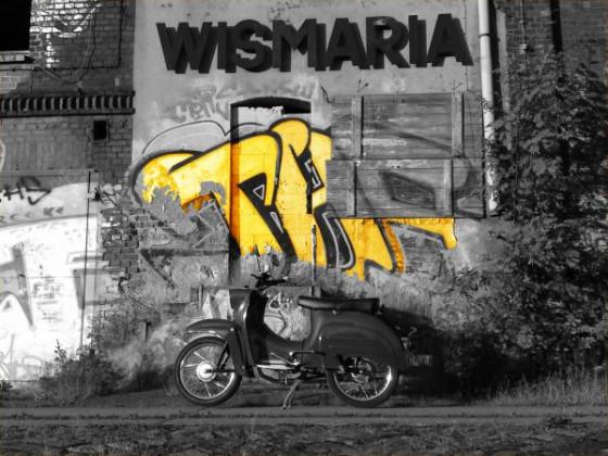 wismaria1